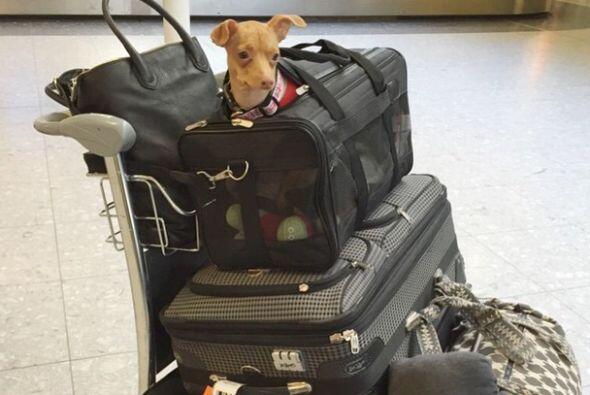 Y si el viaje es en avión, las maletas para mascota son imprescindibles....
