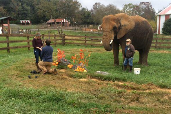 Katie estaba totalmente sorprendida por el elefante.