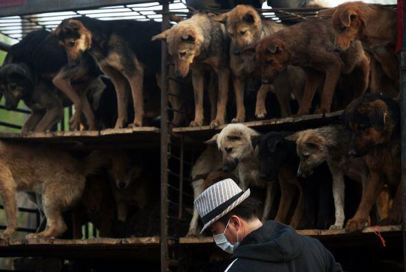 Cada piso tenía más de cien perros. La mayoría de ellos eran perros call...