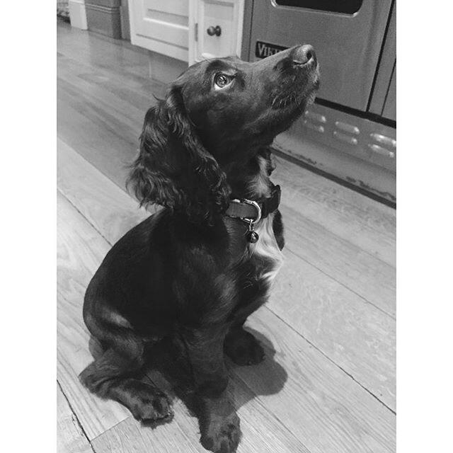 Olive Beckham, la nueva perrita