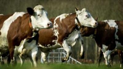 El Departamento de Agricultura de EU reveló que detectó un caso de la en...