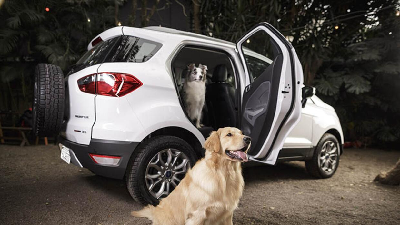 mascotas en el carro