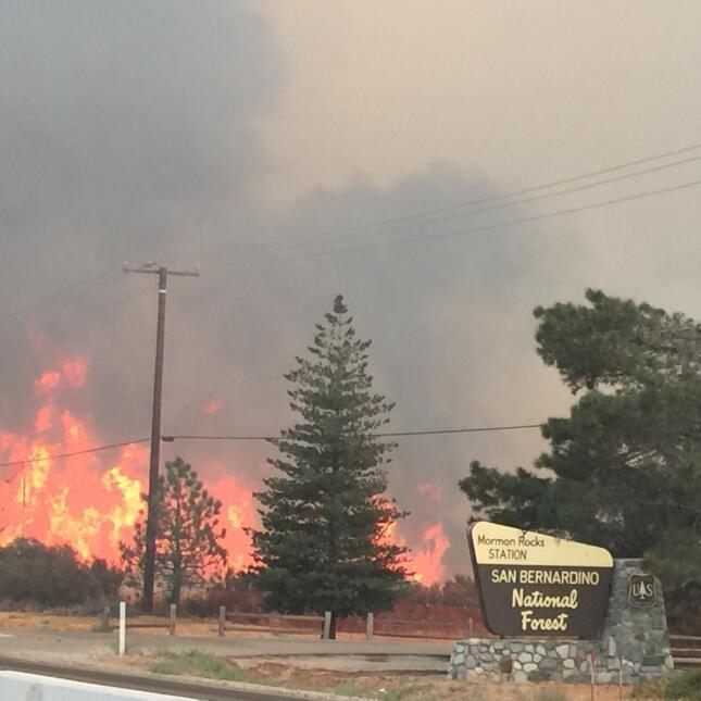 El Bosque Nacional San Bernardino afectado por las llamas.