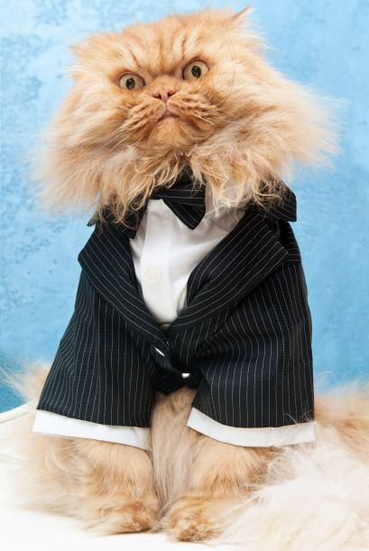 ¿Garfi estará enojado por usar ese mini traje?