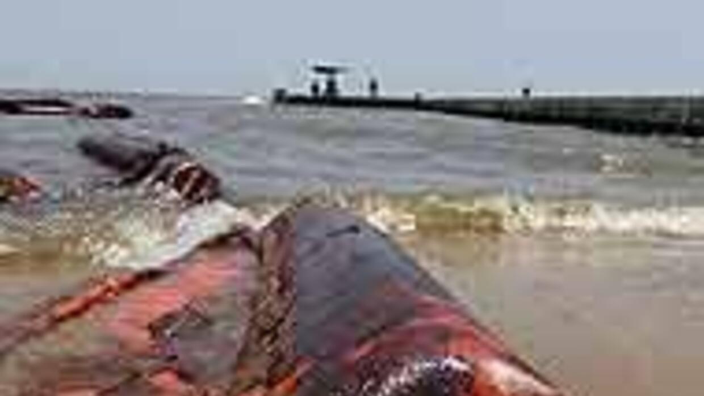 Robots submarinos retiran campana de contención 0afd379edc9e4d01bd1d046c...