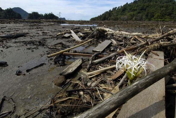 Una más de las consecuencias que pueden traer los devastadores terremoto...