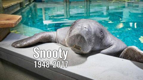 El descubrimiento del animal muerto obligó a cerrar el acuario del Museo...