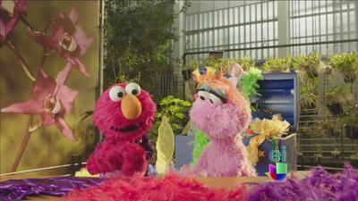 Lola ayudó a Elmo a encontrar alas para su disfraz de pájaro morado