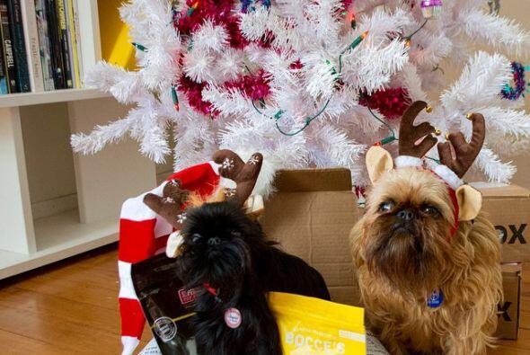 Digby y Alo roban las miradas al por mayor.
