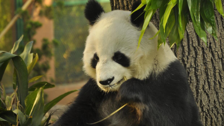 ¿Cuánto cuesta un oso panda? _DSC0009.JPG