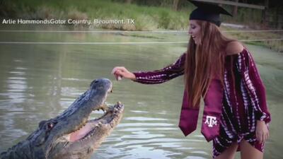 De toga, birrete y con un caimán de 4 metros: las fotos de graduación de una joven de Texas que se volvieron virales