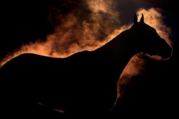 Un caballo emtite vapor de agua mientras es bañado durante los en...
