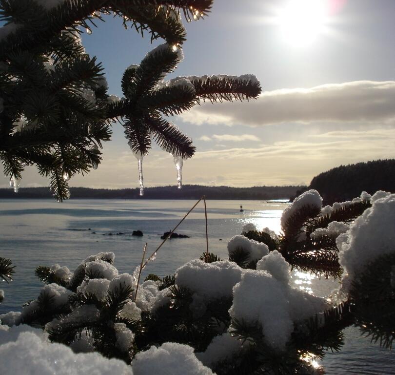 'Bosque' de hielo. Sin la vestimenta adecuada, Kodiak es un lugar en don...
