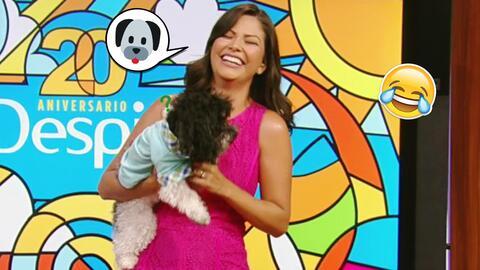 Ana Patricia le contó chistes de perros a su sobrino Chómpiras