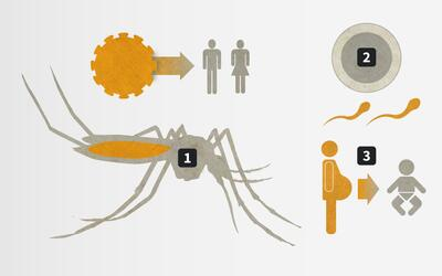 Promo Zika