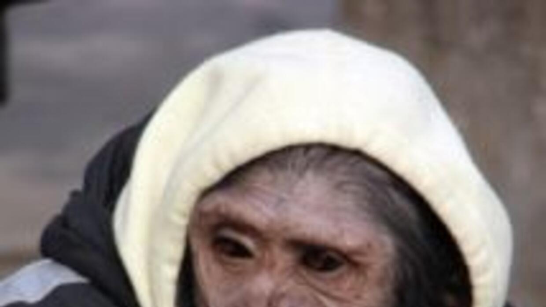 Chita, la chimpancé compañera de Tarzán, vivió sus últimos años en un s...