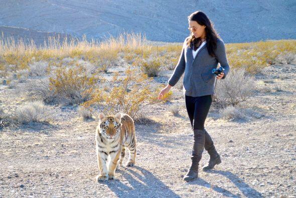 Hace unos días acudieron a convivir con una cría de tigre.  Aquí los vid...