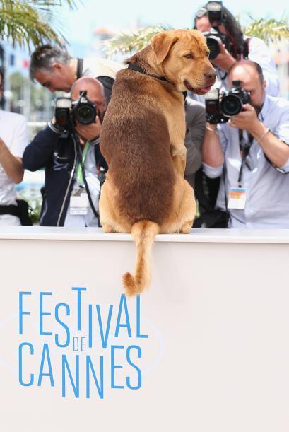 El papel de Hagen fue protagonizado por dos perros llamados Body y Luke.