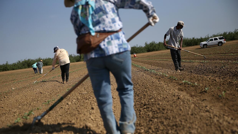 Trabajadores agrícolas en California.