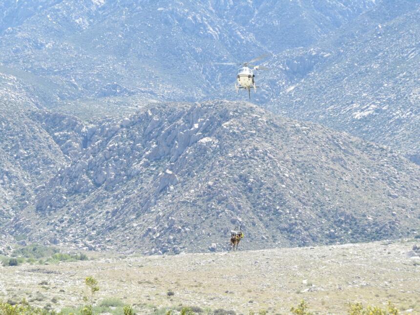 El caballo se aproxima al punto de encuentro con los efectivos médicos