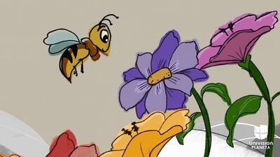 Abejas: insectos en riesgo que aún podemos salvar