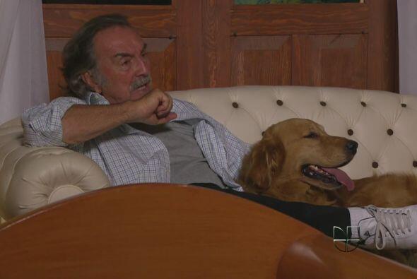 """8. Bruno de """"La Fuerza del Destino"""". Ese hermoso Labrador es el gran com..."""