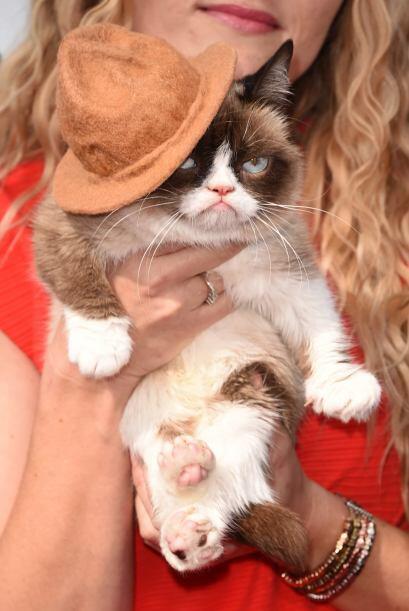 """La sensación de Internet, el """"Grumpy cat"""", se robó la atención de todos..."""