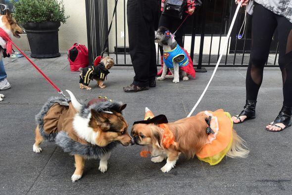 Personajes famosos o alusiones comunes, los perritos nos dieron las mejo...