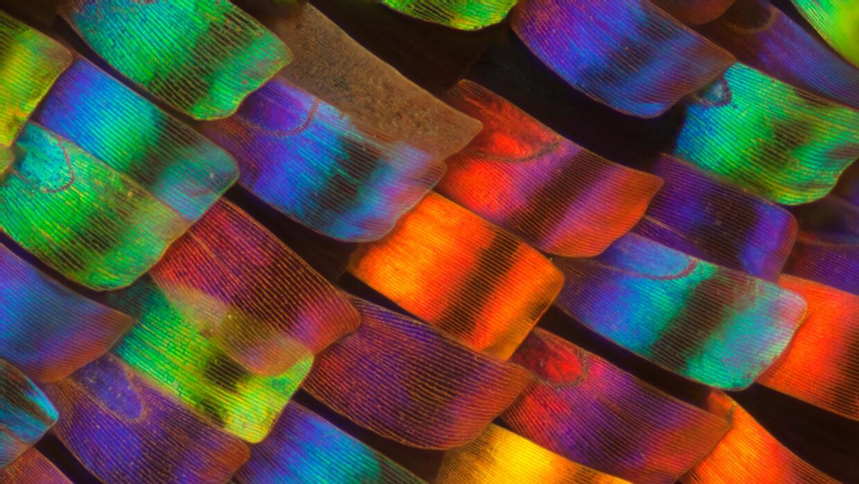 20 imágenes impresionantes del microcosmos Escamas en ala de una polilla...