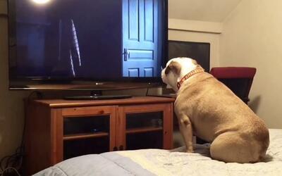 La curiosa reacción de este perro cuando ve una película de terror