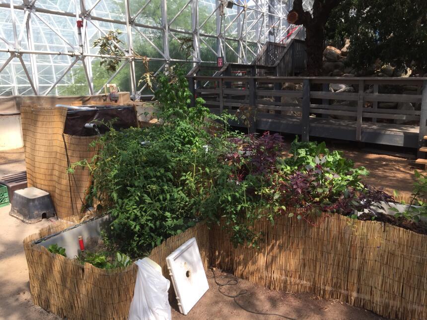 Biosphere 2 el laboratorio para la investigación del ecosistema más gran...