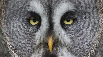 La razón por la que las aves no tienen canas y otros 14 secretos de su plumaje