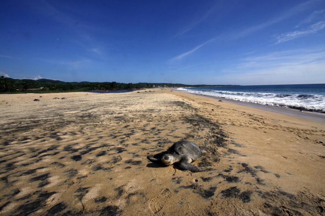 Cinco superpoderes de las tortugas que ni sospechabas GettyImages-184430...