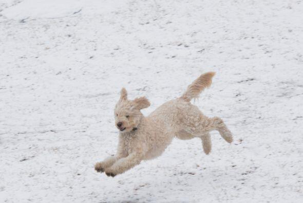 Pero los humanos no son los únicos que se divierten entre la nieve.