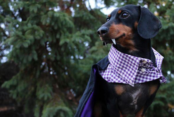 Ryan de 27 años ha realizado las decenas de trajes de su perro, pues qui...