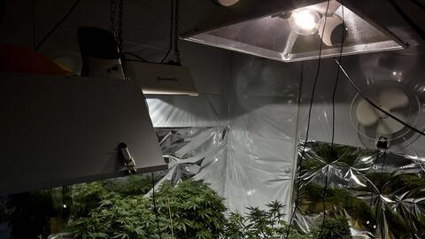 Las autoridades decomisaron casi 2,400 libras de marihuana en tres bodegas.