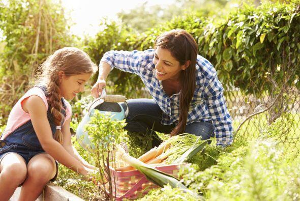 Huerta. Otra gran opción consiste en plantar vegetales, árboles frutales...