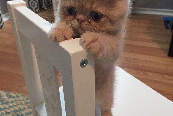 """""""Sí, realmente parece disgustado pero es el gato más cariñoso que he con..."""