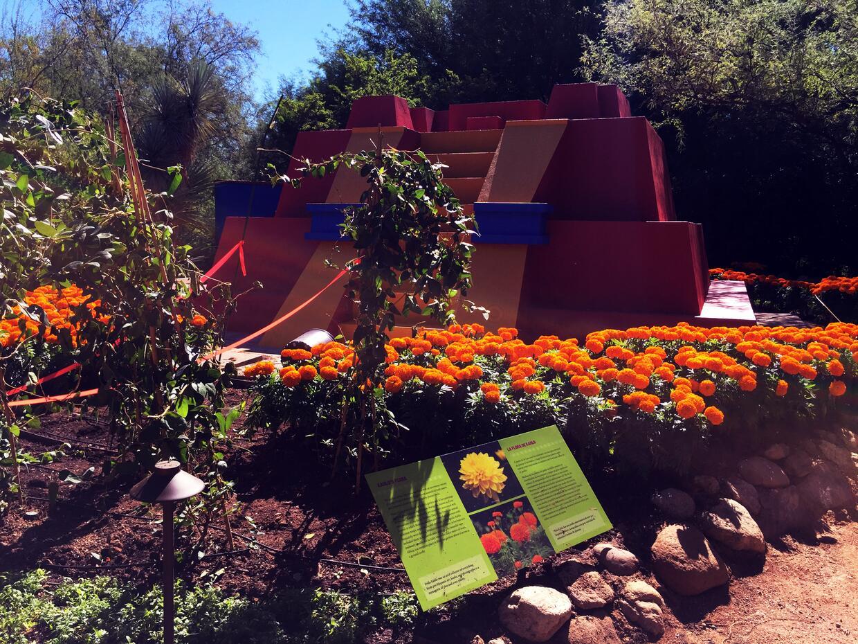 Univision Arizona Inicio Exhibicion Frida Kahlo (16).JPG