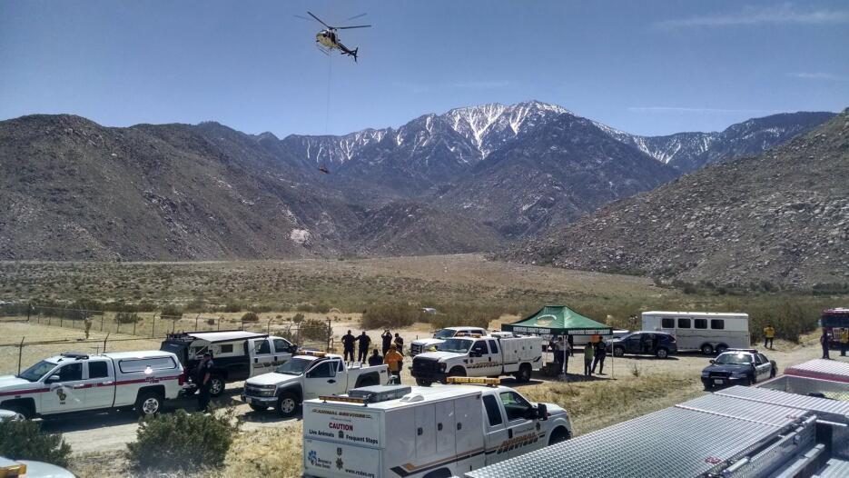 El helicóptero transporta al caballo hasta la zona de atención médica