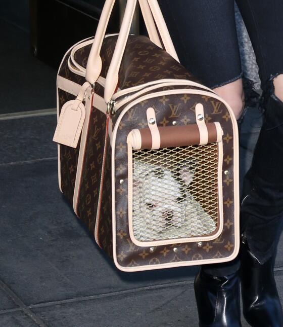 Lady Gaga y su perrito