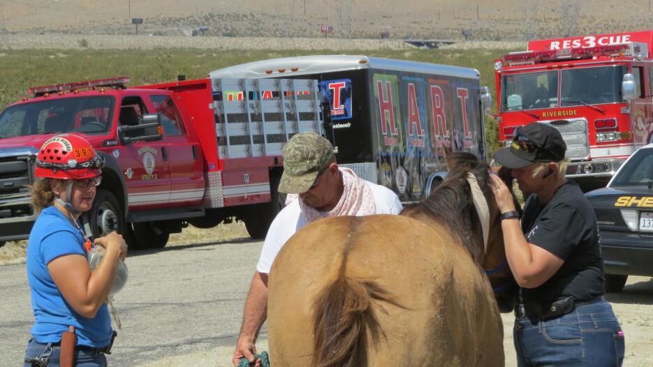 Cuidadores de caballos muestra afecto al equino tras ser rescatado