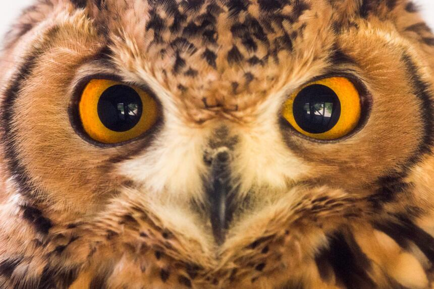 Los ojos de las aves