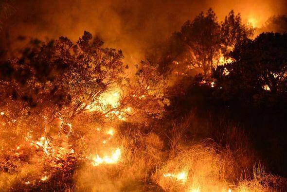 Matorral bajo y árboles en llamas durante un incendio forestal en St Hel...