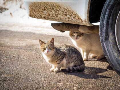 10 consejos para ayudar a los animales a resistir el frío istock-8241705...