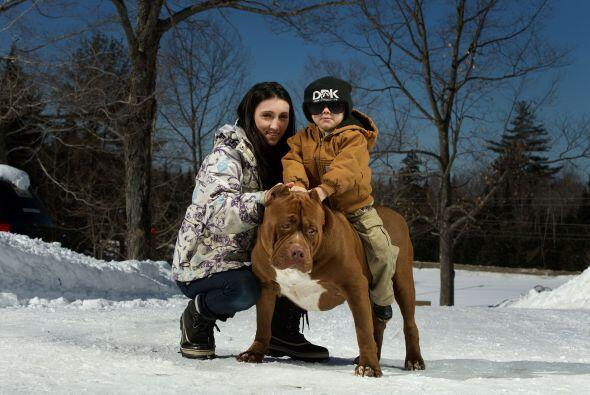 Marlon y Lisa Grennan son los dueños de este gran perro, y no temen que...