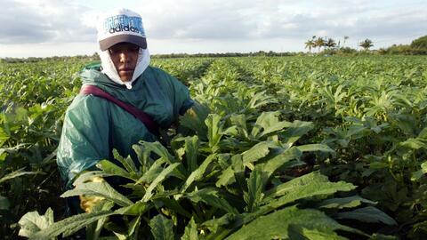 Una trabajadora migrante en Homestead, Florida