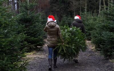 'Mulchfest', el evento para reciclar los árboles de Navidad