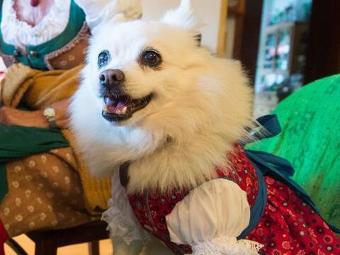 Ropa para perros con inspiración alemana