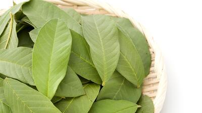 Las hojas de guayaba ¿imán de buena suerte?